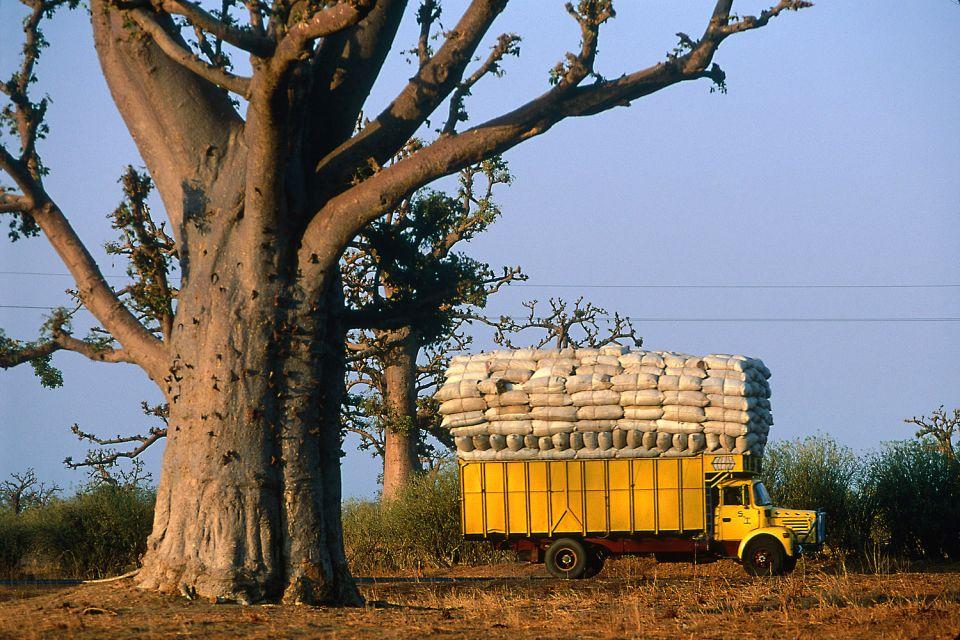 Les paysages, cap-vert, afrique, dakar, ville, commerce, baobab