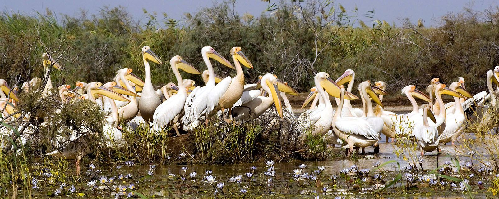 Djoudj-Nationalpark, Der Djoudj-Nationalpark, Die Fauna und Flora, Senegal
