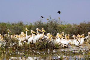 Le parc national du Djoudj , Sénégal