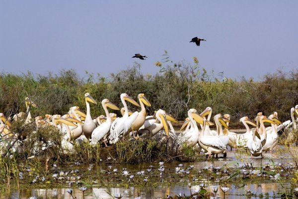 Il Parco Nazionale del Djoudj, La fauna e la flora, Senegal