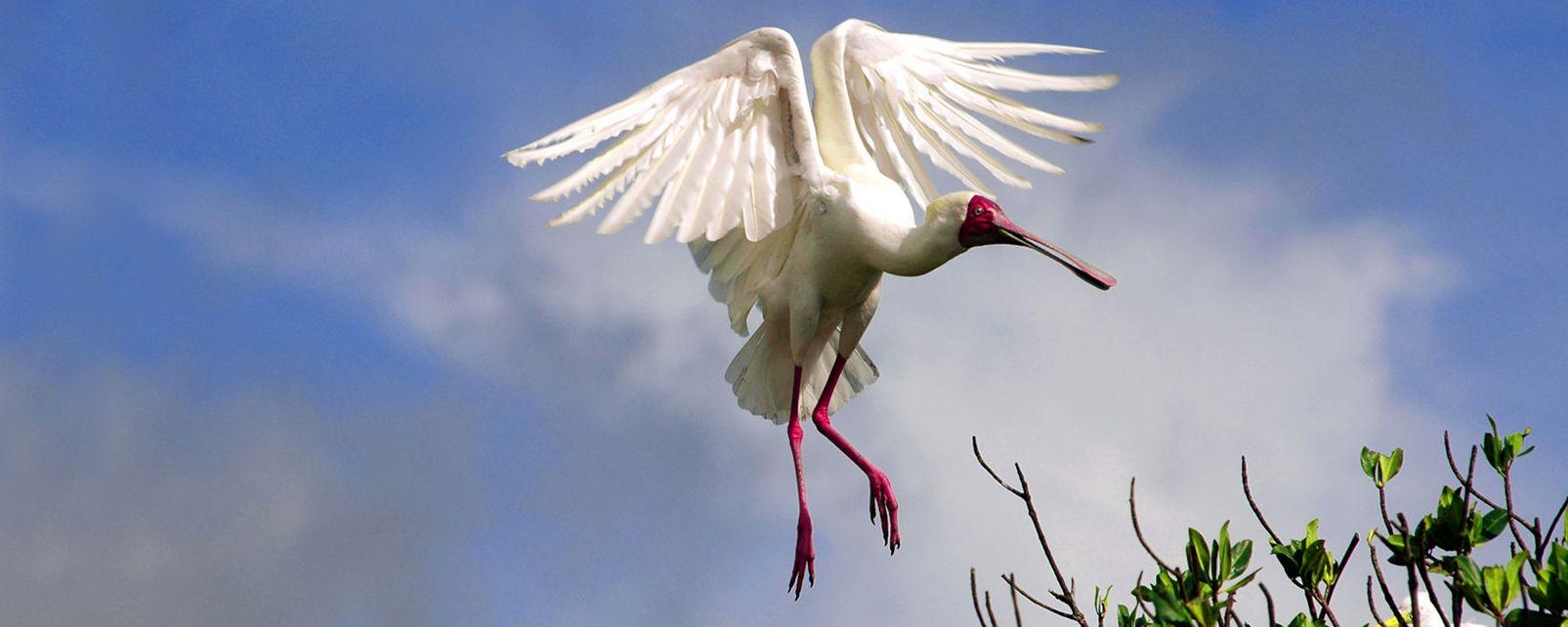 Der Niokolo-Koba-Park, Der Park von Niokolo-Koba, Die Fauna und Flora, Senegal