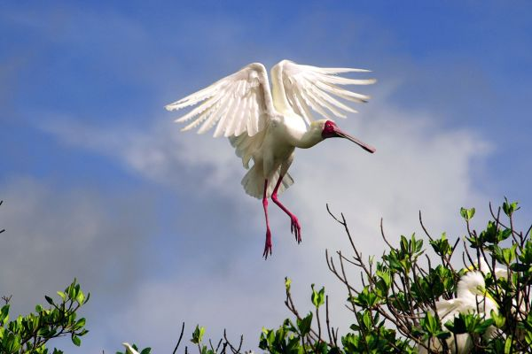 Il parco di Niokolo-Koba, Il Parco Nazionale di Niokolo-Koba, La fauna e la flora, Senegal