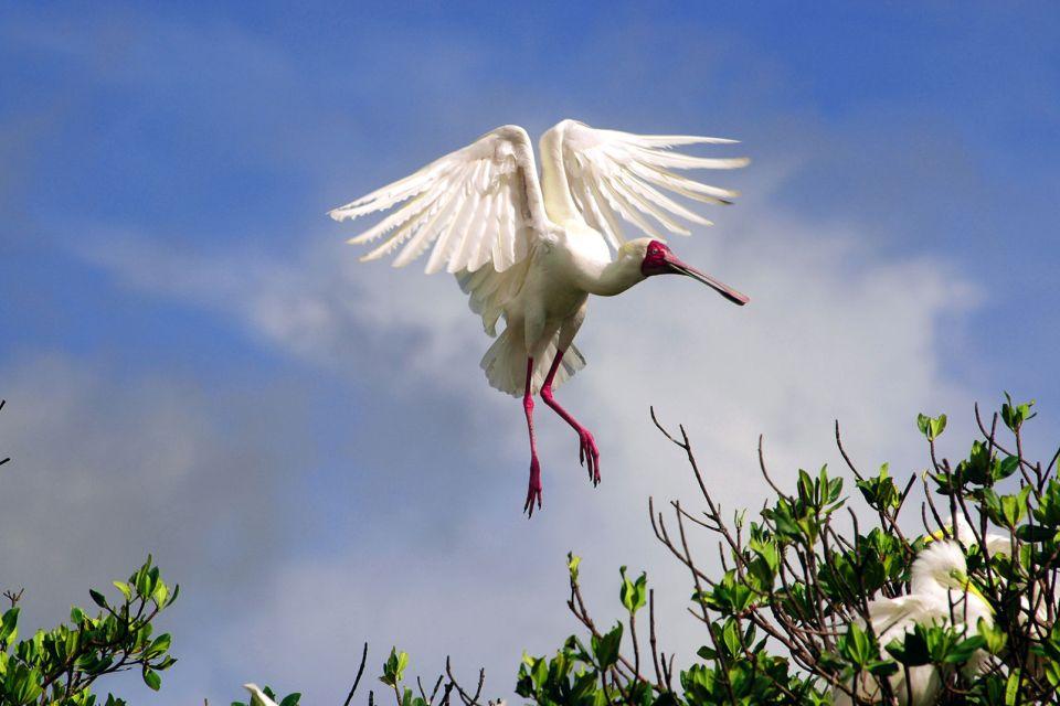 El parque de Niokolo-Koba, El Parque de Niokolo Koba, Fauna y flora, Senegal