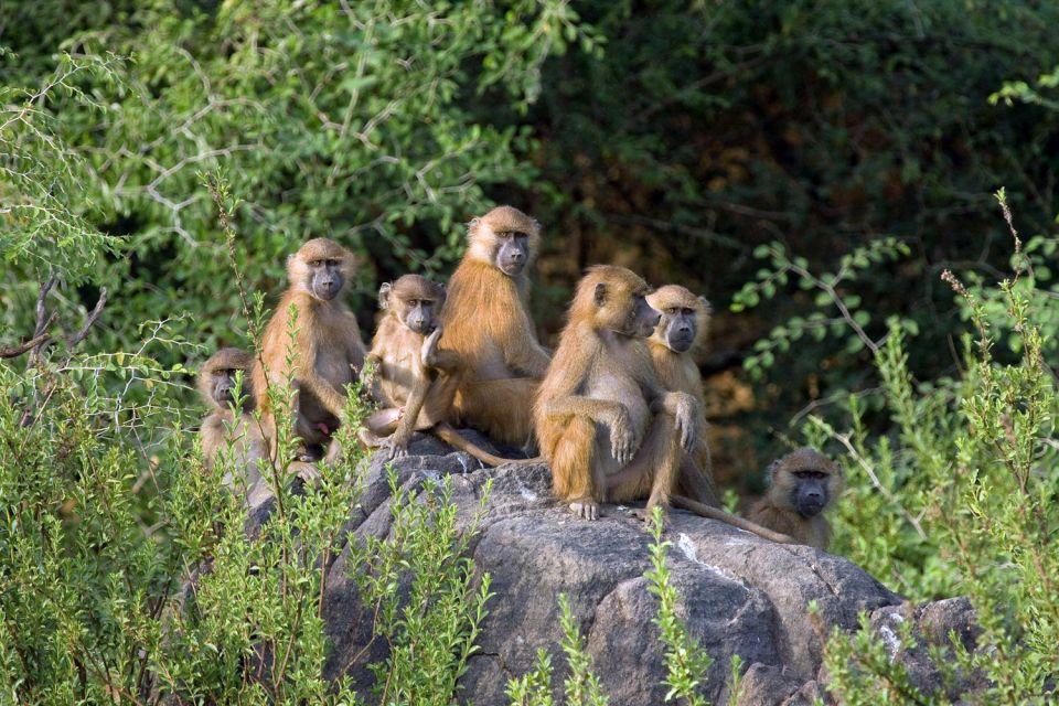 , El Parque de Niokolo Koba, Fauna y flora, Senegal