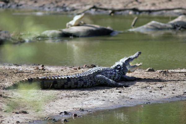 Il parco zoologico di Bandia, Il Parco Nazionale di Basse-Casamance, La fauna e la flora, Senegal