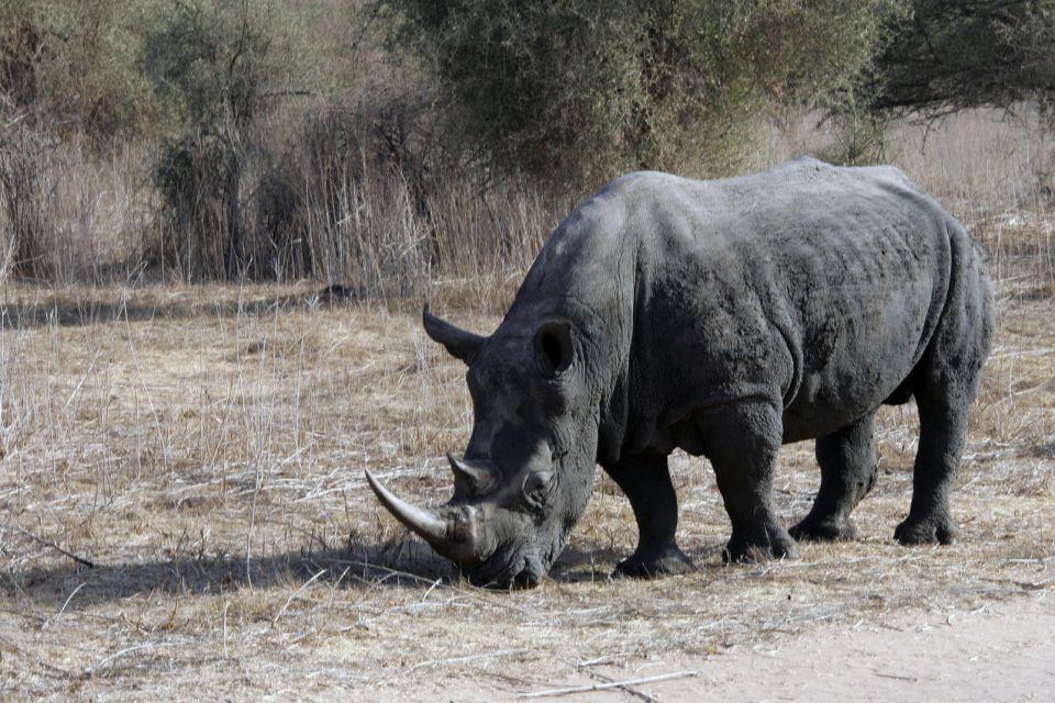 La faune et la flore, afrique, sénégal, rhinocéros, mammifère, faune, animal