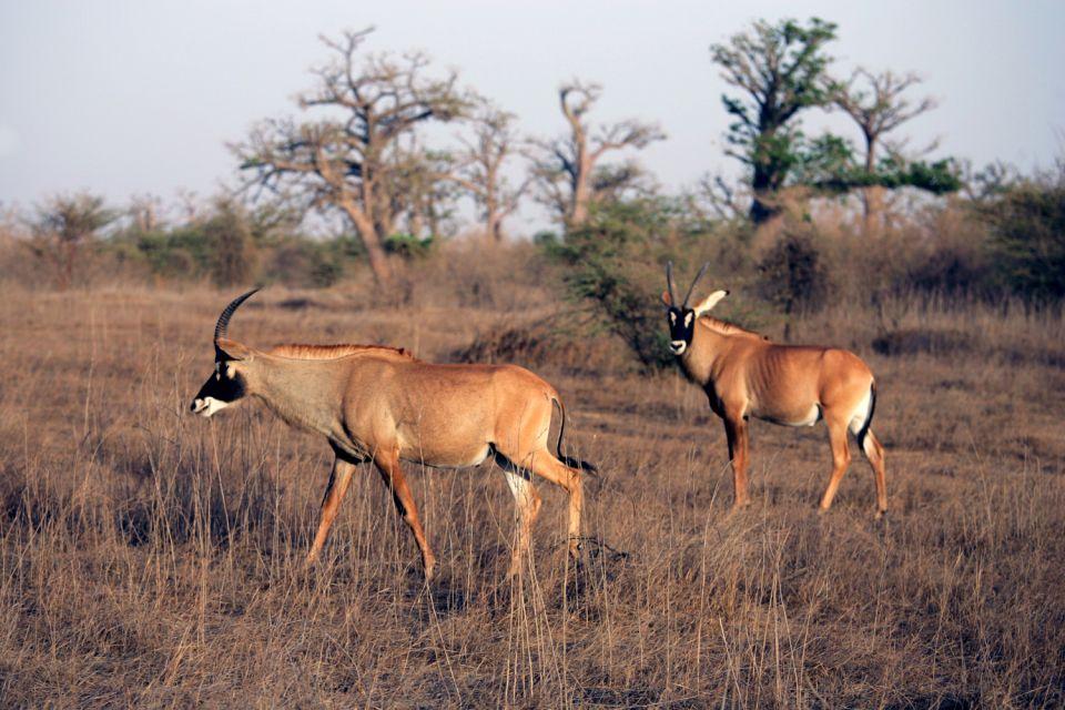 Le parc animalier de Bandia , Phacochères , Sénégal