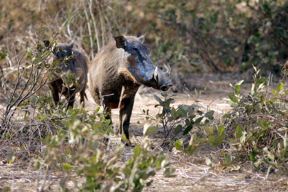 Le parc animalier de Bandia , Antilopes , Sénégal