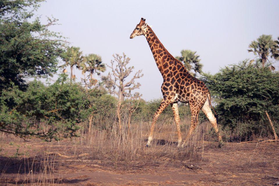 Le parc animalier de Bandia , Hippotrague , Sénégal
