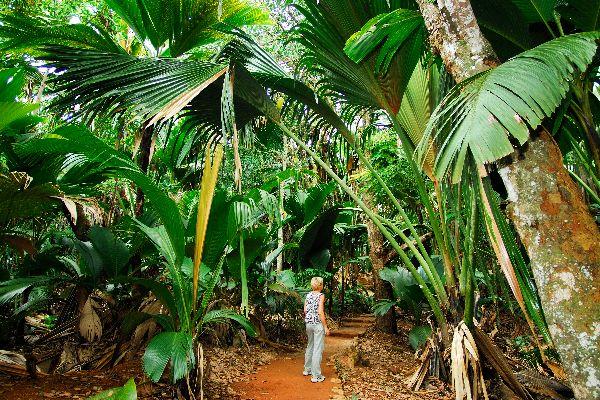 Das Vallée de Mai (Praslin) , Seychellen