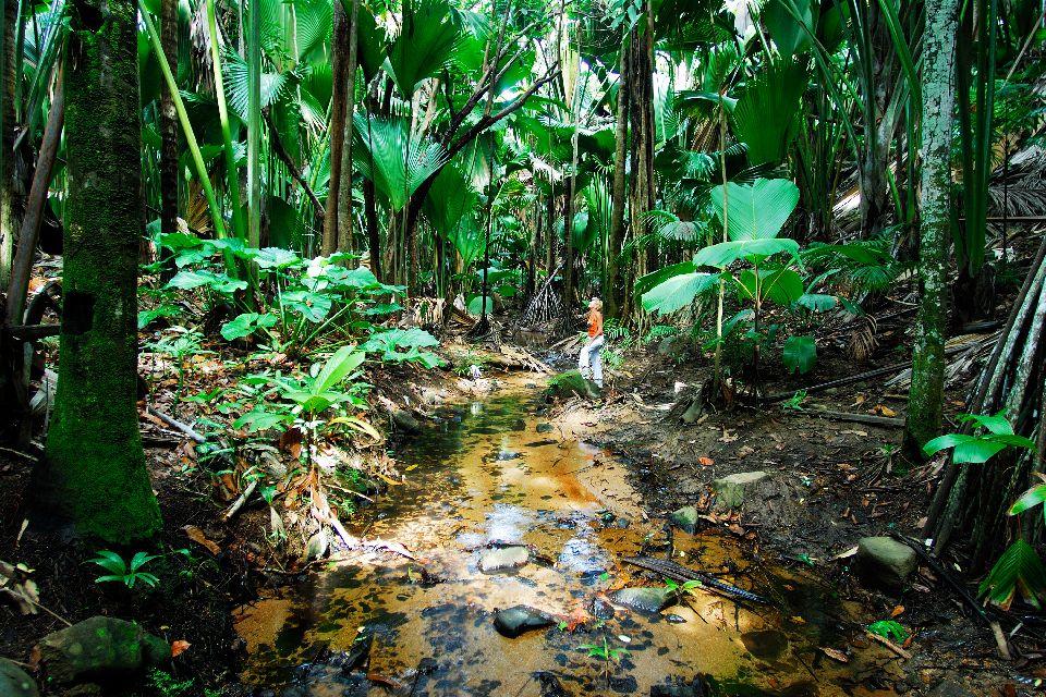 La Vallée de Mai (Praslin) , Le jardin d'Eden , Seychelles