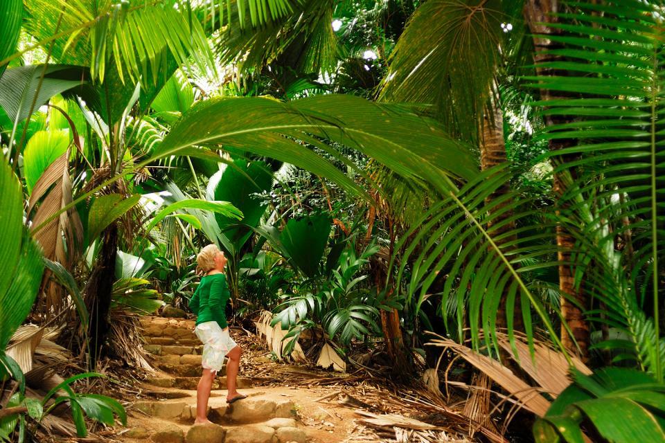 Praslin , El Valle de Mai , Las Seychelles