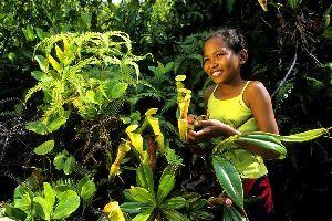 Les plantes , Le jardin d'Eden , Seychelles
