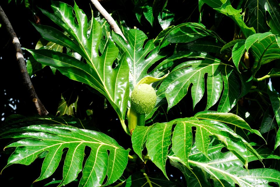 Las plantas , Un museo vivo de historia natural , Las Seychelles