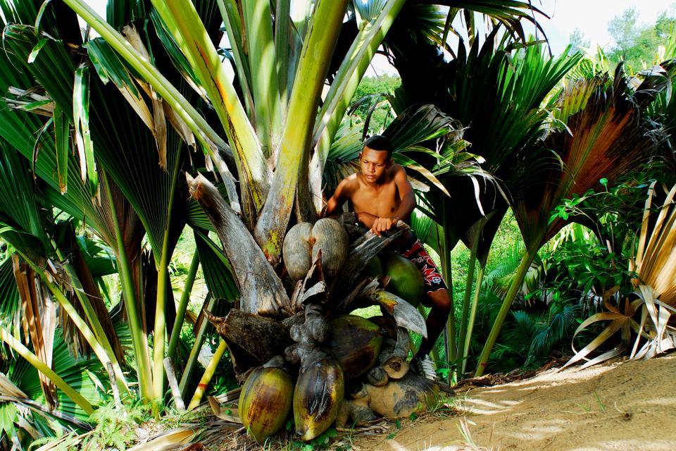 Las plantas , Un pueblo en armonía con la naturaleza , Las Seychelles