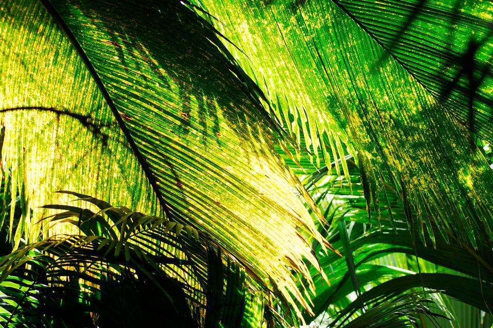Las plantas , Uno de los últimos paraísos naturales , Las Seychelles