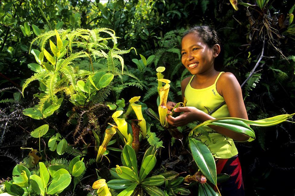 Las plantas , El jardín del Edén , Las Seychelles