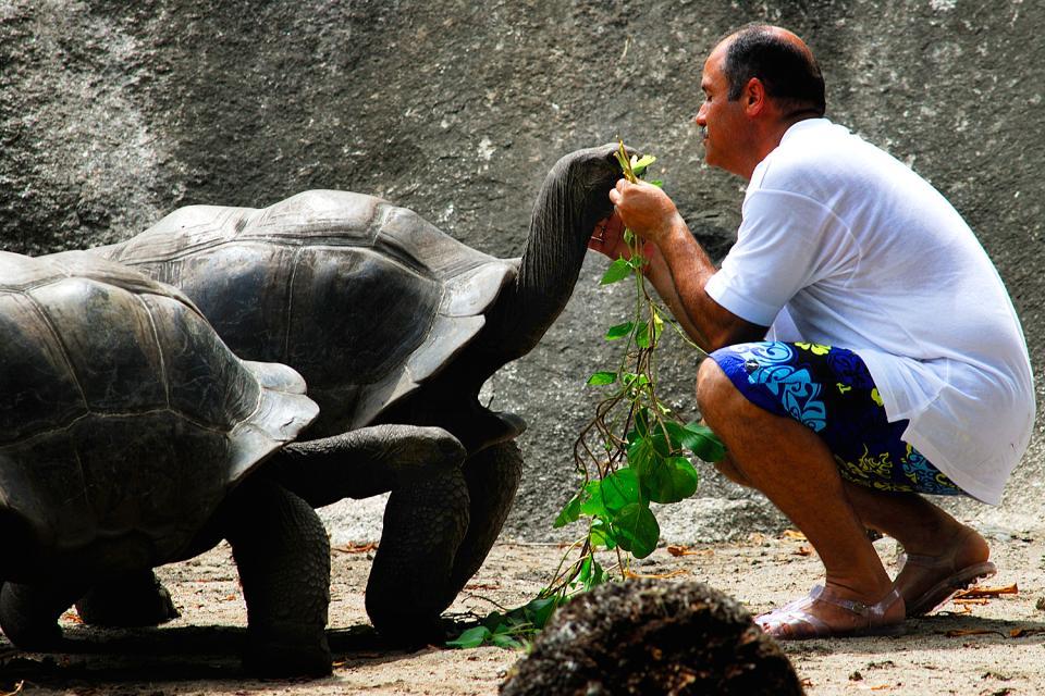 Le tartarughe , Incontro del terzo tipo , Seychelles
