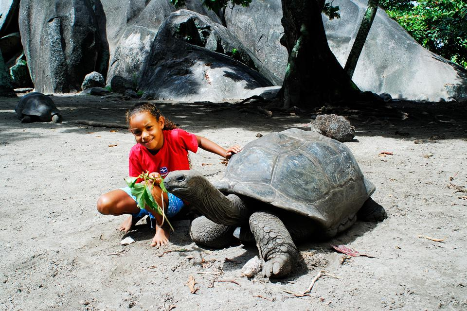 Le tartarughe , Ai bambini piacciono tantissimo! , Seychelles