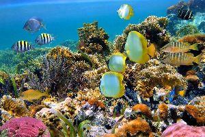 La plongée , Les fonds sous-marins , Seychelles