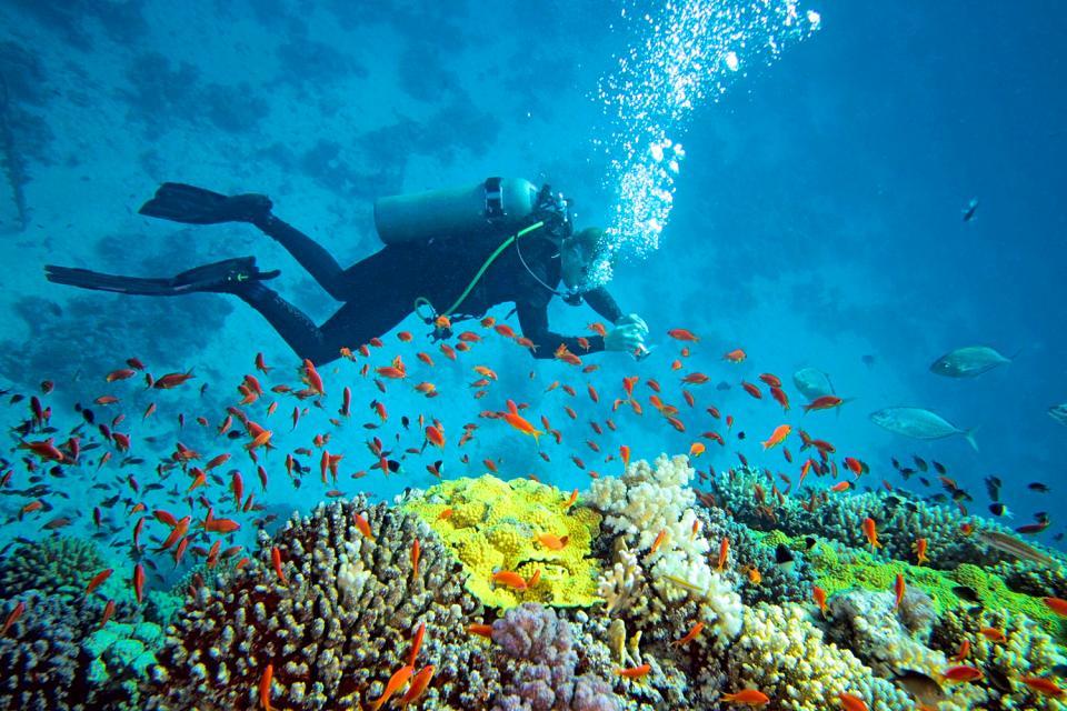 I fondali marini , Un subacqueo in esplorazione , Seychelles