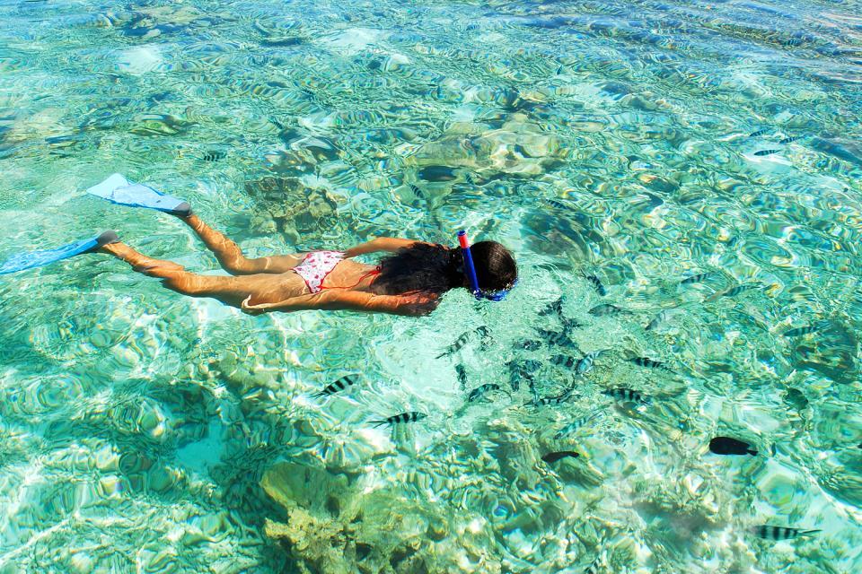 I fondali marini , Uno luogo di immersione molto rinomato , Seychelles