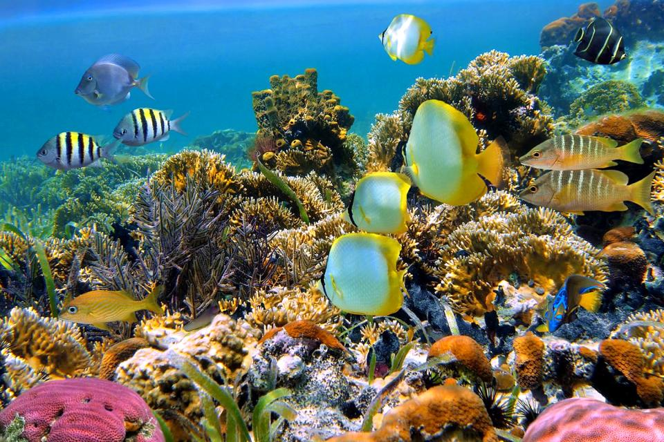 I fondali marini , Seychelles