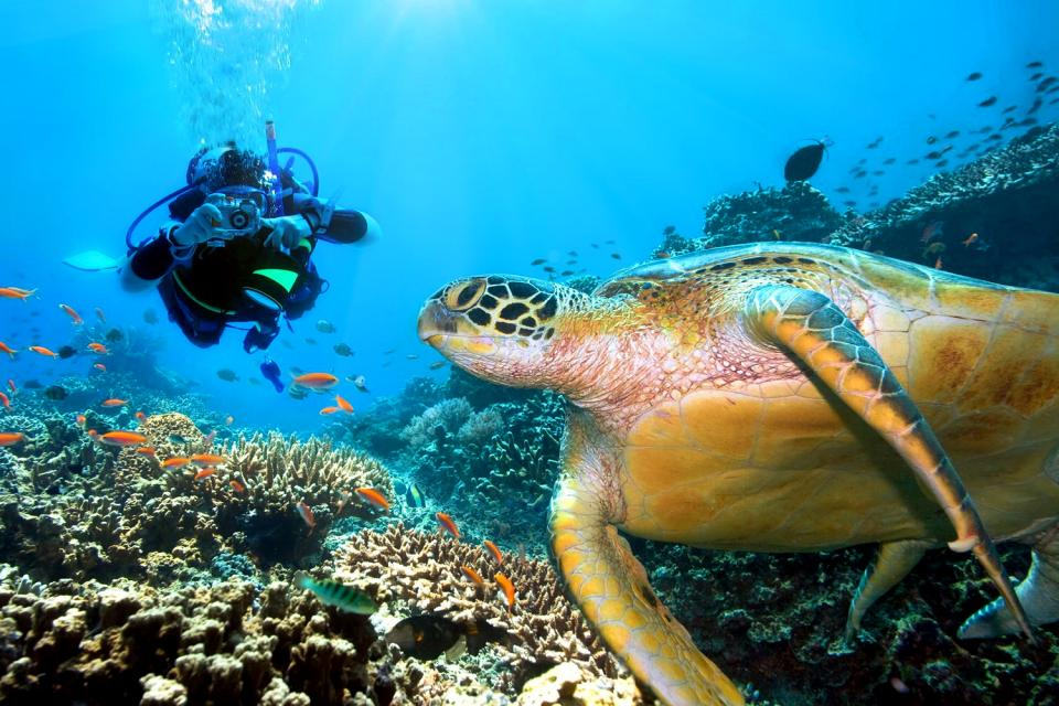 I fondali marini , Una fauna marina spettacolare , Seychelles