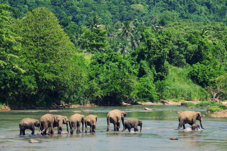 La faune bangladaise , Bangladesh