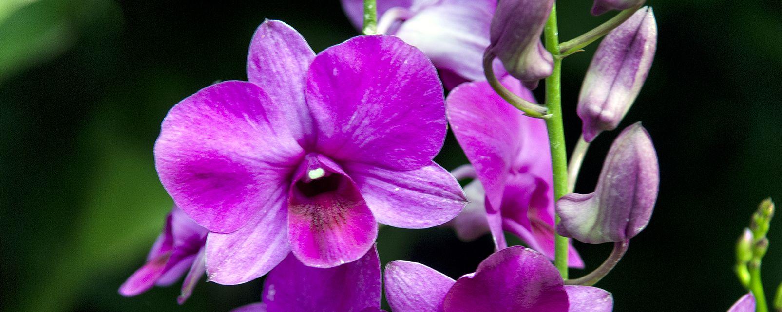 Le jardin botanique, Les jardins botaniques, Les parcs naturels et jardins, Singapour