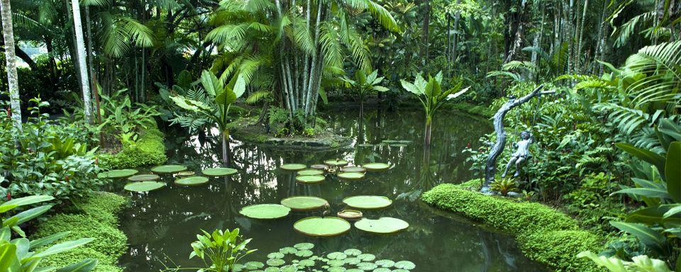 Les jardins botaniques singapour for Au jardin les amis singapore