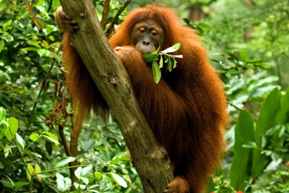 The zoological garden , Singapore