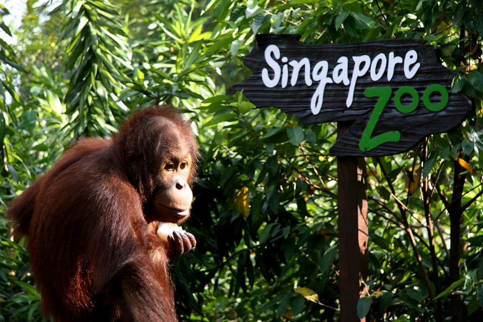 Il giardino zoologico , Singapore