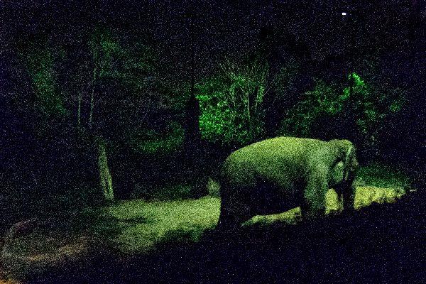The Night Safari , Singapore