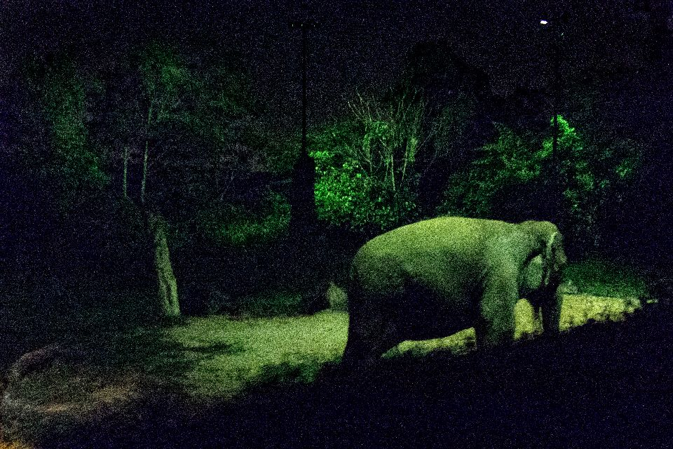 Night Safari , Singapur