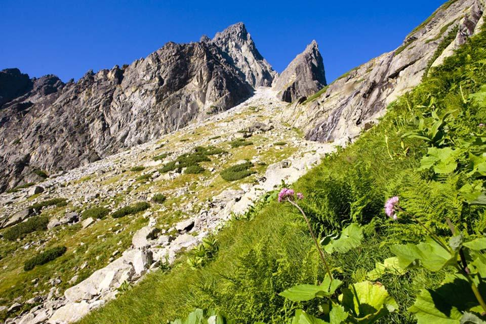 The High Tatras massif , Fauna of the High Tatras , Slovakia