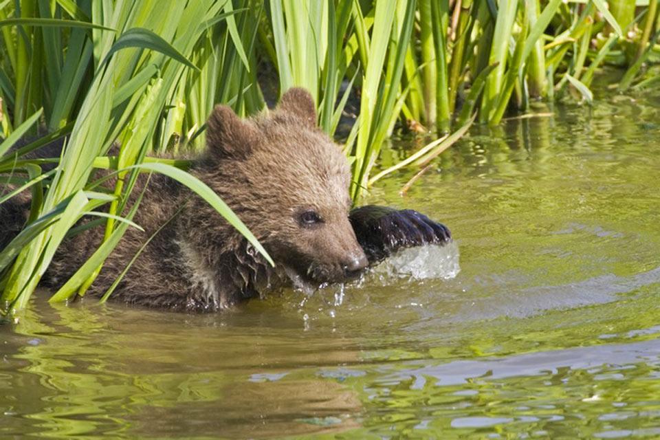 Wildlife , Fauna , Slovakia