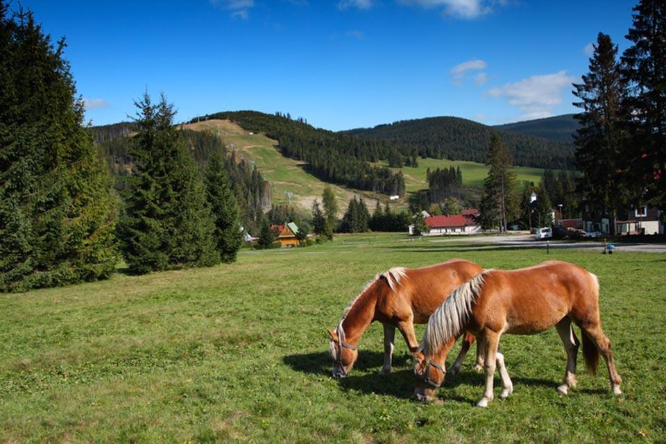 Wildlife , Horses in Slovakia , Slovakia