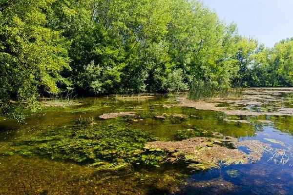 Plantlife , A waterway in Slovakia , Slovakia
