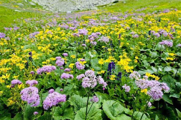 Plantlife , Flowers in Slovakia , Slovakia
