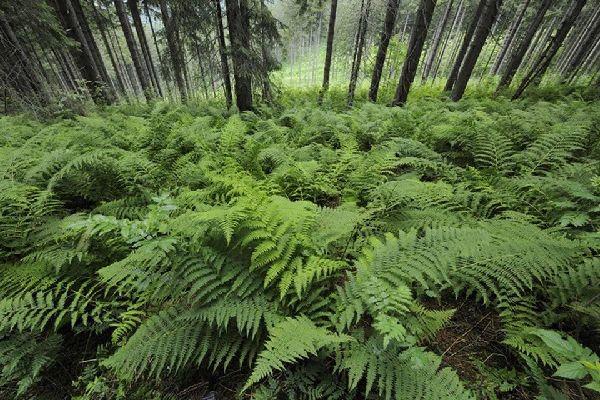Plantlife , Mala Fatra National Park , Slovakia