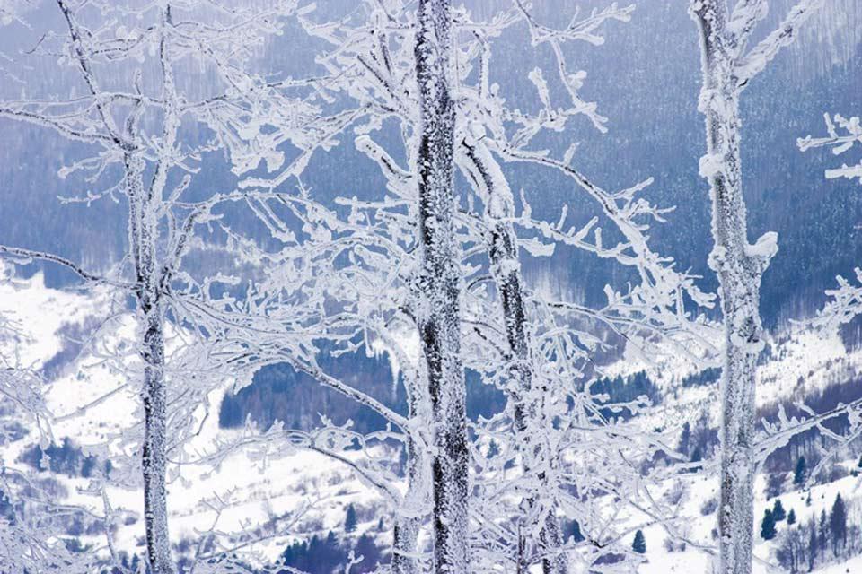 Plantlife , Slovakia in winter , Slovakia