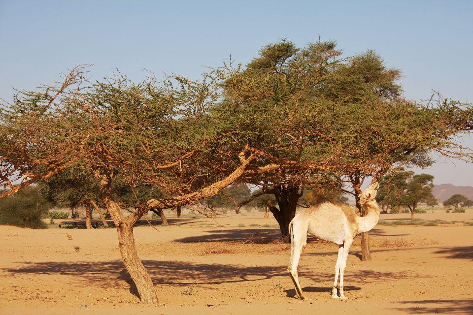 La région du Darfour , Soudan