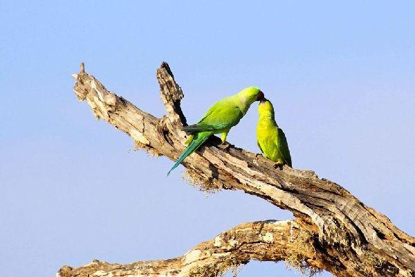 La gent ornithologique , Sri Lanka