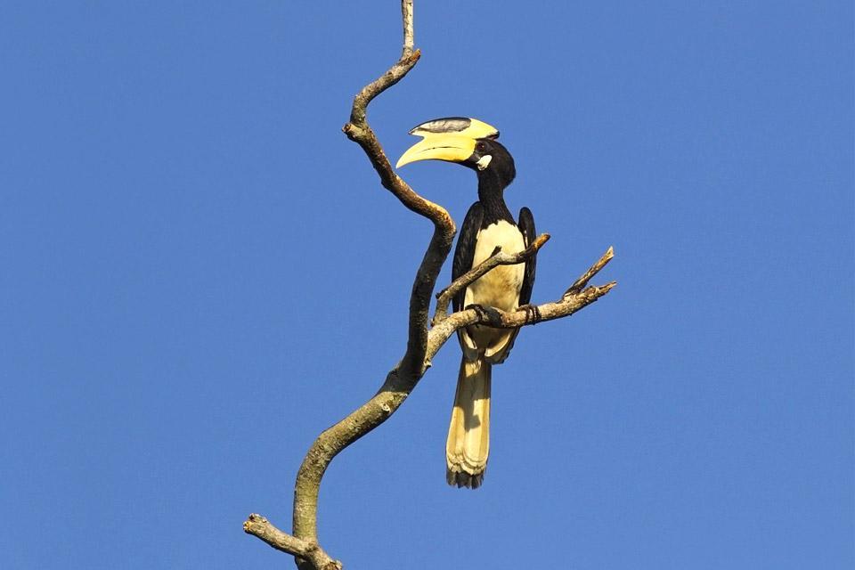 La gent ornithologique , La faune du Sri Lanka , Sri Lanka