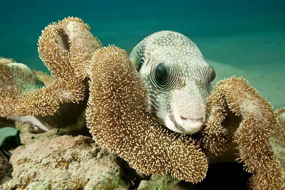 La faune sous marine , Sri Lanka