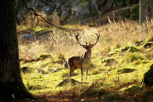 Naturschutzgebiete , Die Naturschutzgebiete von Schweden , Schweden