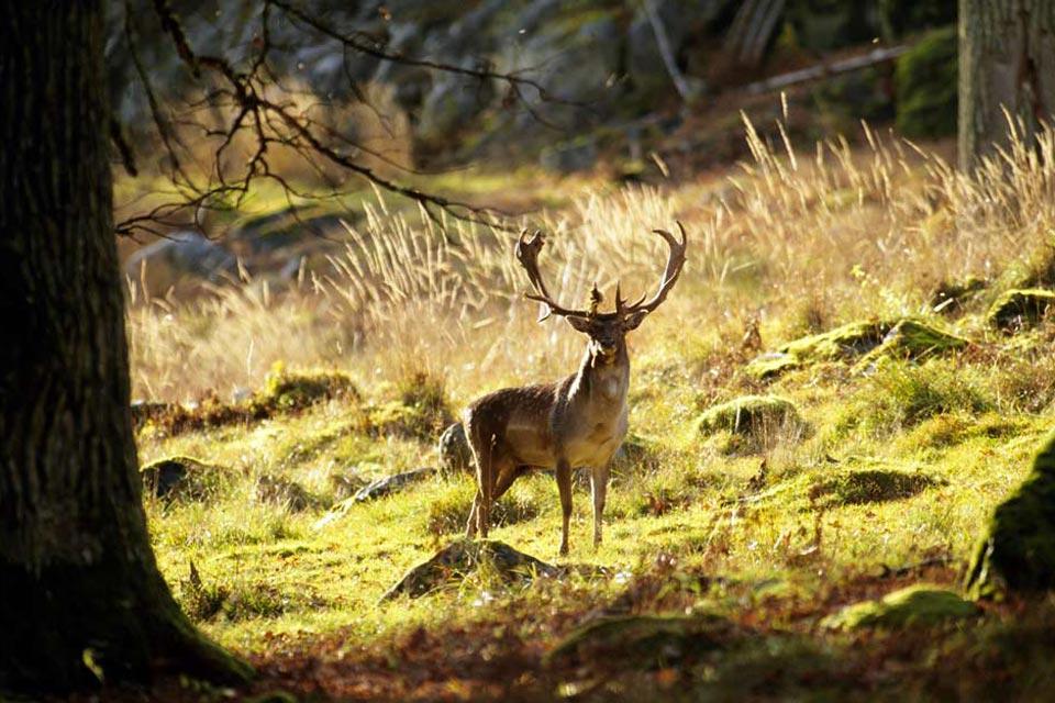 The nature reserves , Sweden's nature reserves , Sweden