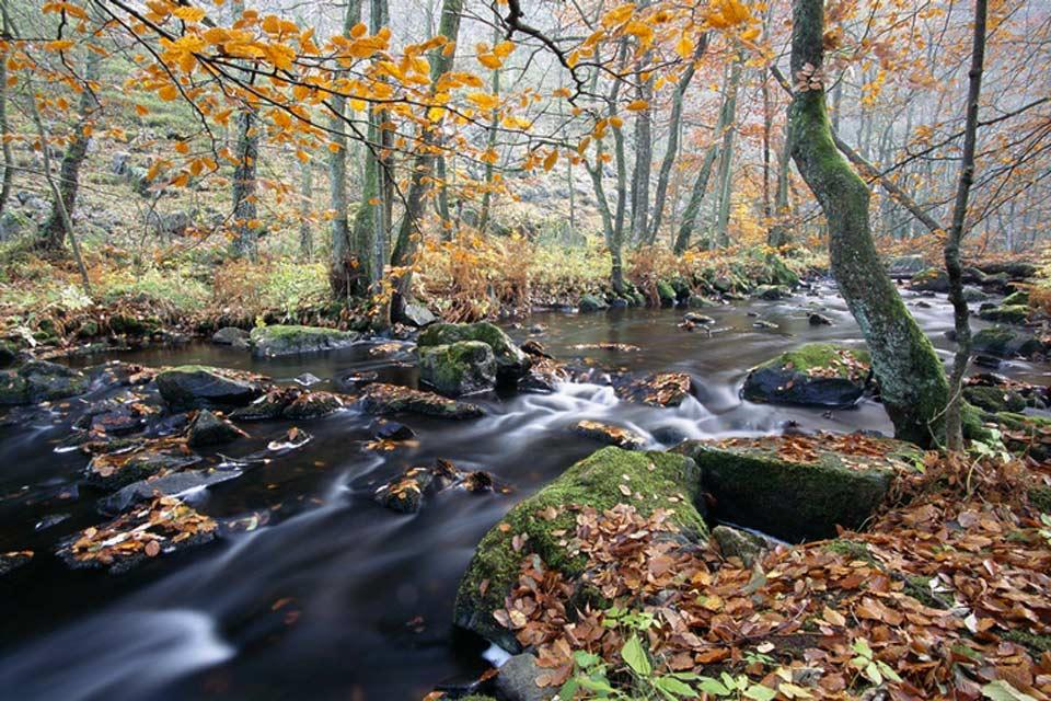 The nature reserves , Rivers , Sweden