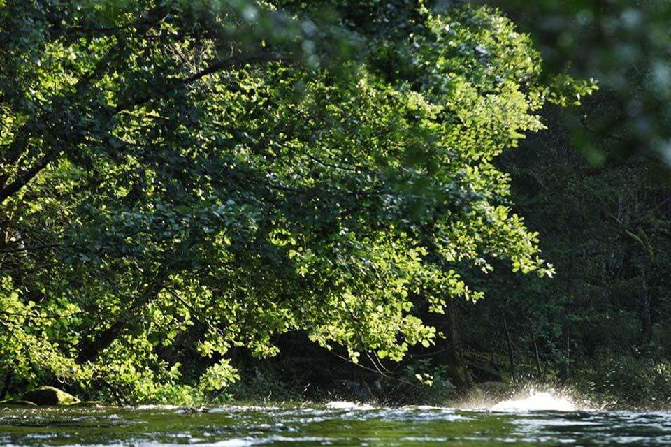 The nature reserves , Visiting the country by boat , Sweden